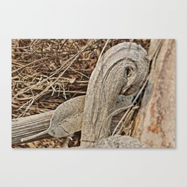 Still life in palm bark Canvas Print