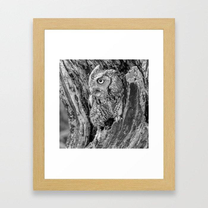 Echo the Screech Owl by Teresa Thompson Framed Art Print