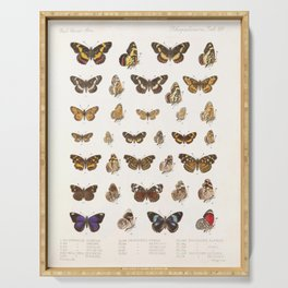 Vintage Scientific Insect Butterfly Moth Biological Hand Drawn Species Art Illustration Serving Tray