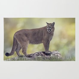 Florida panther or cougar on a log Rug