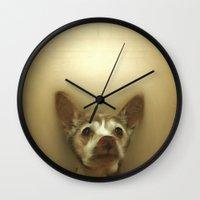 tintin Wall Clocks featuring Dog: Tintin in Renaissance by marynate