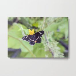 Bordered Patch Butterfly by Murray Bolesta Metal Print