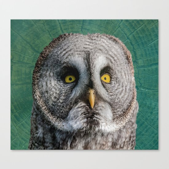 GREY OWL Canvas Print