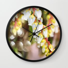 Beautiful Pieris Japonica small white flowers close-up blossoming in spring Wall Clock