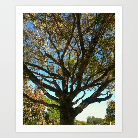 Sunset tree Art Print
