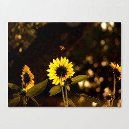 Buzz Canvas Print