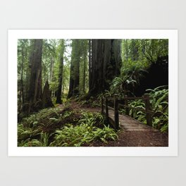 Redwood Roaming - California Wanderlust Art Print