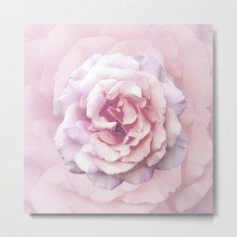 Pink Rose Beauty Metal Print