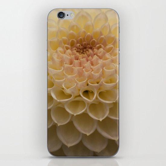 Creamy Dahlia iPhone & iPod Skin