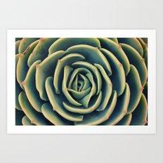 Echeveria x Imbricata Succulent Art Print