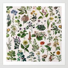 vintage botanical print Art Print