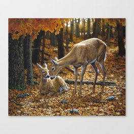 Whitetail Deer and Fawn in Autumn Canvas Print
