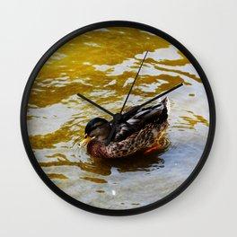 Duck swimming in golden water Wall Clock