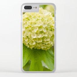 Viburnum opulus Roseum inflorescence Clear iPhone Case