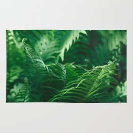 Macro photography of a fern in a tropical forest. Nature background. Rug