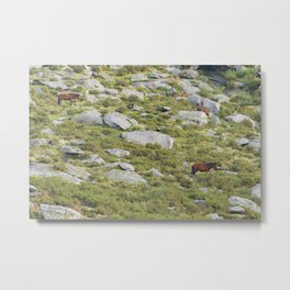 Three brown horses grazing on the mountain Metal Print
