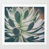 plant Art Prints featuring Plant by pf_photography