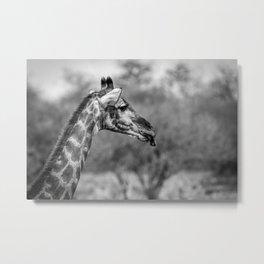 B&W Giraffe  Metal Print