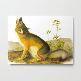 Swift Fox Vintage Scientific Illustration Metal Print