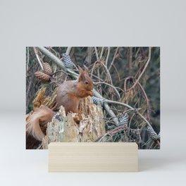 woodland delights Mini Art Print
