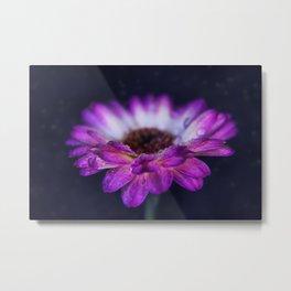 Purple Gerbera Daisy Closeup Metal Print