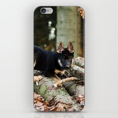 Cold snout playing in the forest iPhone & iPod Skin