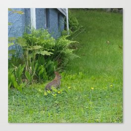 Guest in the Yard Canvas Print