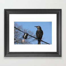 USA - NASHVILLE - Bird on String of Lights Framed Art Print