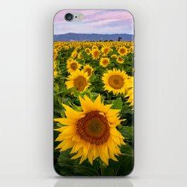 Field of Sunflowers, California iPhone Skin