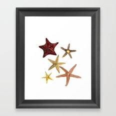 Ocean Treasures No.2 Starfish Framed Art Print