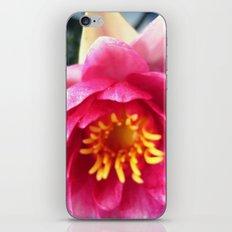 Pink WaterLily II iPhone & iPod Skin
