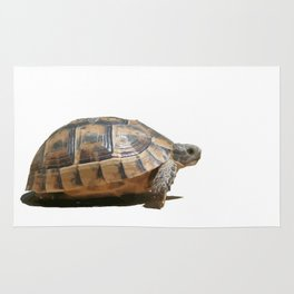 Sideview of A Walking Turkish Tortoise Isolated Rug