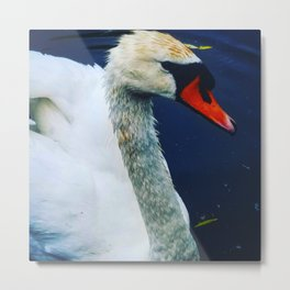 Swan afloat Metal Print