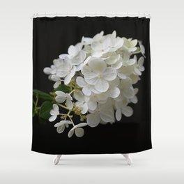 Vanilla Fraise Shower Curtain