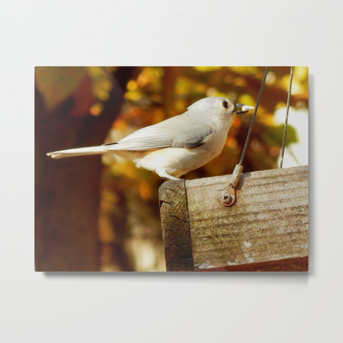 Fall Tufted Titmouse Metal Print
