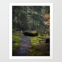 Mossy path Art Print
