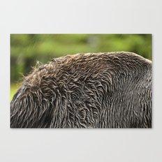 Wet Fur Canvas Print