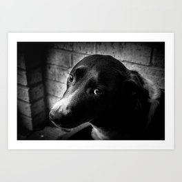 The Lonely Pooch Art Print