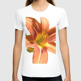 another daylily on white T-shirt