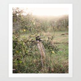 Apple Orchard Art Print
