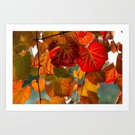 Autumn leaves 1 Art Print