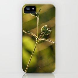 Wild garden flower iPhone Case