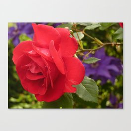 A Single Red Rose Canvas Print