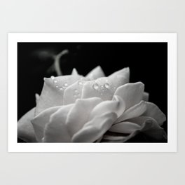 Floral Nature Photography - Delicate Rose with Water Droplets - Black and White Art Print