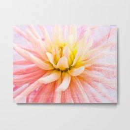 A summer Dahlia flower on wood texture Metal Print