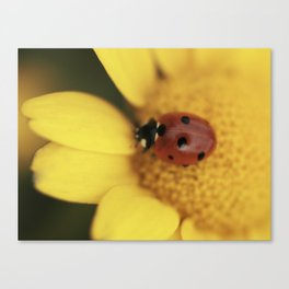 Ladybug on yellow flower - macro still life - fine art photo for interior design Canvas Print