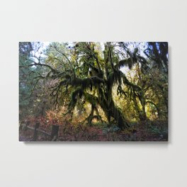 Hoh, Moss Covered Maple Metal Print
