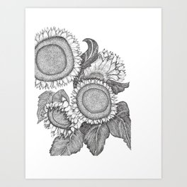 Sunflowers Black and White Ink Drawing Art Print