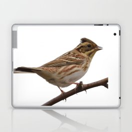 Rustic Bunting Bird Vector Isolated Laptop & iPad Skin