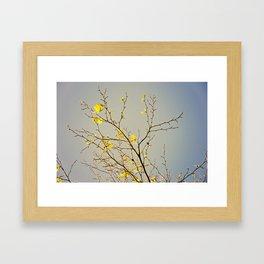 SPRING SYCAMORE Framed Art Print
